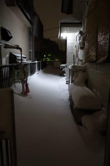 0208大雪 (2).JPG